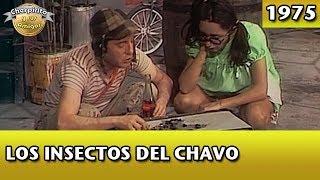 El Chavo | Los insectos del Chavo (Completo)