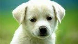 getlinkyoutube.com-Most beautiful creature video 3 - Wildlife, animals and bird photography