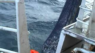 "getlinkyoutube.com-Seining in the North Sea on ""Fruitful Harvest"" from Scotland in 2003"