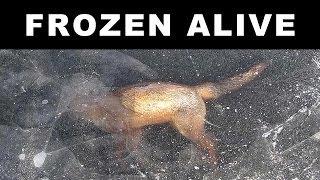 getlinkyoutube.com-ANIMALS FOUND FROZEN IN ICE
