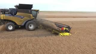 getlinkyoutube.com-Peas harvest 2016. Canada. Delage Farms (4K video). Markusson New Holland. MY AGRO.