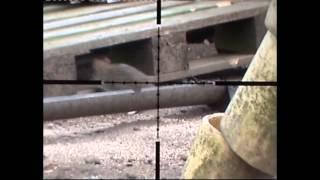 getlinkyoutube.com-ratting with air rifles.