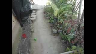 getlinkyoutube.com-jose carlos   brincando de cavalinho de pau com guigui e clebim