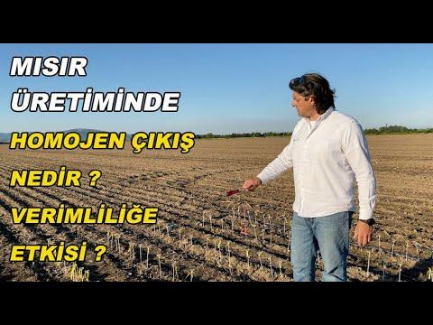 MISIR ÜRETİMİNDE YÜKSEK VERİMİN SIRRI 1.Bölüm Homojen Çıkış (High Yield Corn. Even Emergence)
