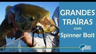 getlinkyoutube.com-Pescaria de GRANDES TRAÍRAS com isca Spinner Bait em Salto Santiago - PR