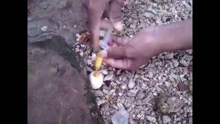 Ramuan Jitu Untuk Kesehatan Burung Merpati Balap