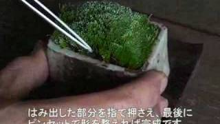 getlinkyoutube.com-益子焼の器で苔と戯れる