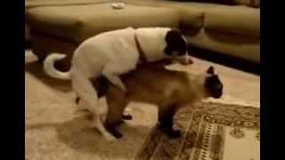 getlinkyoutube.com-Cat and Dog