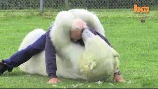 getlinkyoutube.com-Agresion animal 20 - Ataque de animales en vivo.
