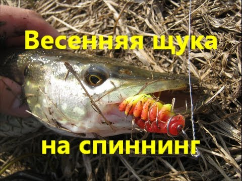 Весенняя щука на спиннинг/Spring pike spin-fishing. Техасская оснастка/Texass rig. 23.03.2014.