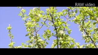 getlinkyoutube.com-Canon EOS 600D RAW Video(Magic Lantern)