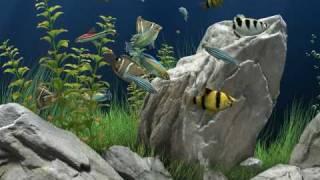 getlinkyoutube.com-Dream Aquarium sreensaver HD
