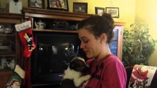 getlinkyoutube.com-Lindsey's puppy for Christmas!