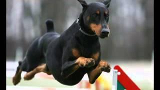 getlinkyoutube.com-اشرس 10 كلاب في العالم