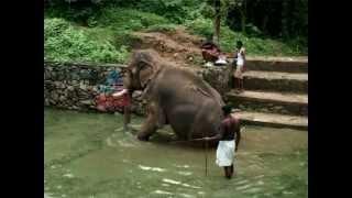 """getlinkyoutube.com-""""Elephants at Mangalakunnu in Palakkad""""-Kettathum Kandathum 14,July 2012 Part 1"""