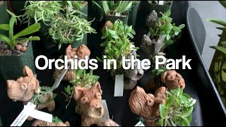 getlinkyoutube.com-Orchids in the Park
