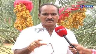 getlinkyoutube.com-Successful farming of Date Palm or Kharjura in Nalgonda District - Express TV