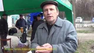 getlinkyoutube.com-Пчеловод М.Л.Горнич: Про Пчеломаток, Про Статус и Структуру Пчелосемьи