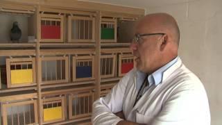 getlinkyoutube.com-Stefan Steenbergen - english version