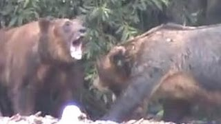 getlinkyoutube.com-Гигантский медведь людоед