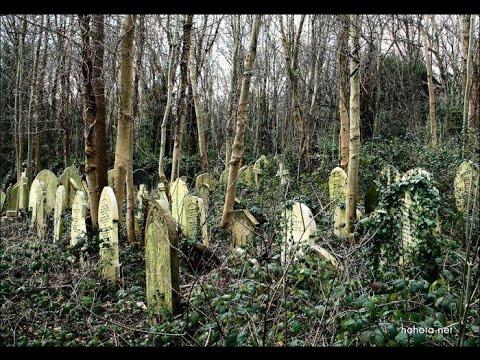 Находки, найденные в страшном лесу