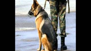 getlinkyoutube.com-Top 10 Worlds most vicious dog breeds