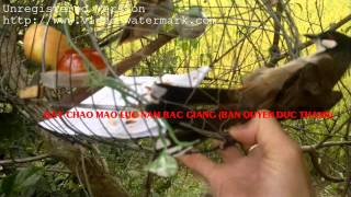 getlinkyoutube.com-Bay chao mao luc nam BG 21102011003 new
