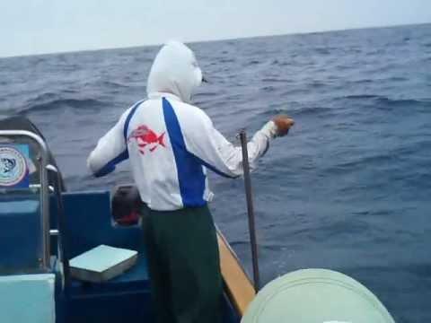 2013年5月8日 華貴釣大青斑 40斤 - YouTube