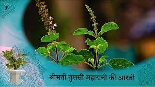 Prayers to Tulsi Maharani with Lyrics  | Tulsi Aarti  |