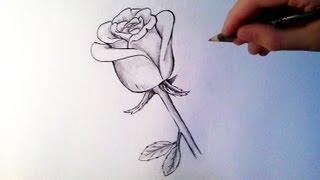 getlinkyoutube.com-Comment dessiner une rose [Tutoriel]