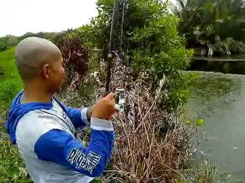 First strike my snakehead fish at fish pond with casting technique