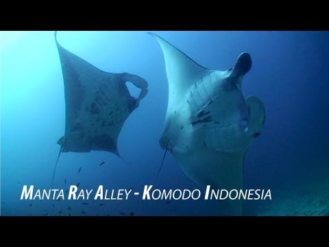 Amazing HD Footage - Manta Alley Komodo Indonesia