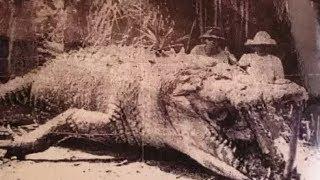 getlinkyoutube.com-Top Biggest Crocodile Ever Caught