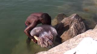 getlinkyoutube.com-Medusa encontrada en la playa del rodeito en marbella SUPER JELLYFISH