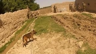 getlinkyoutube.com-Firefight From A Dog Handlers Helmet Cam in Afghanistan