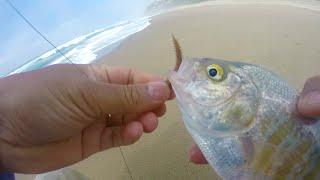 getlinkyoutube.com-surf fishing for  perch