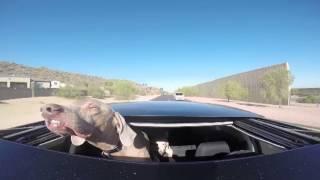 Собака выглядит очень веселой, высунувшись из люка движущегося автомобиля
