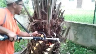 Oil palm pruner, oil palm harvesters, Mesin Kelapa Sawit MORI 03