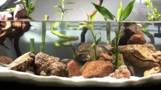 getlinkyoutube.com-Aquascape Setup Series/Aqua Terrarium - Bamboo Style - Animalia Kingdom Show
