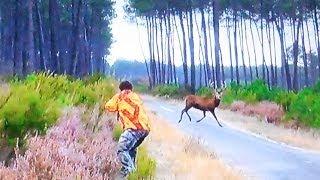getlinkyoutube.com-Beaux tirs de plusieurs cerfs dont un 14 cors