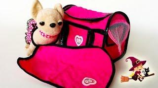 getlinkyoutube.com-Adorable Perrita Chi Chi Love   Jugamos con nuestra amiga ChiChiLove   Vídeo en español