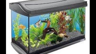 एक्वेरियम (aquarium) घर में सही तरीके से रखने से जल्दी होंगे मालामाल