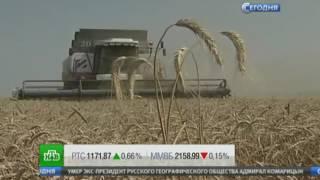 Минсельхоз развеял опасения о возможном дефиците качественного зерна