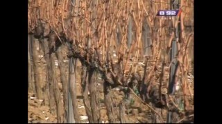 getlinkyoutube.com-Prilog o tome kako da pravilno orezete vinograd