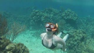 getlinkyoutube.com-3-21-2013 Isla Roatan Free Diving