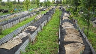 getlinkyoutube.com-Be a Worm Farmer