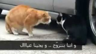 getlinkyoutube.com-طوشة قطط عجيبة موت ضحك  تحشيش