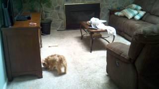 getlinkyoutube.com-Ghost Scares Dog on Camera