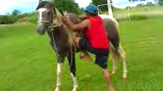 getlinkyoutube.com-tombo de cavalo