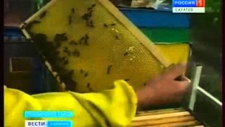 getlinkyoutube.com-Пчеловод из Хвалынска изобрел конструкцию улья